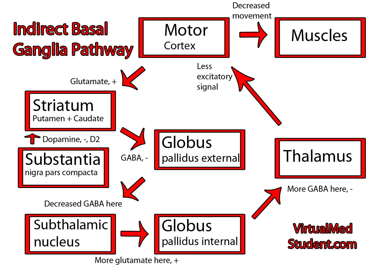 Basal Ganglia Indirect Pathway Schematic